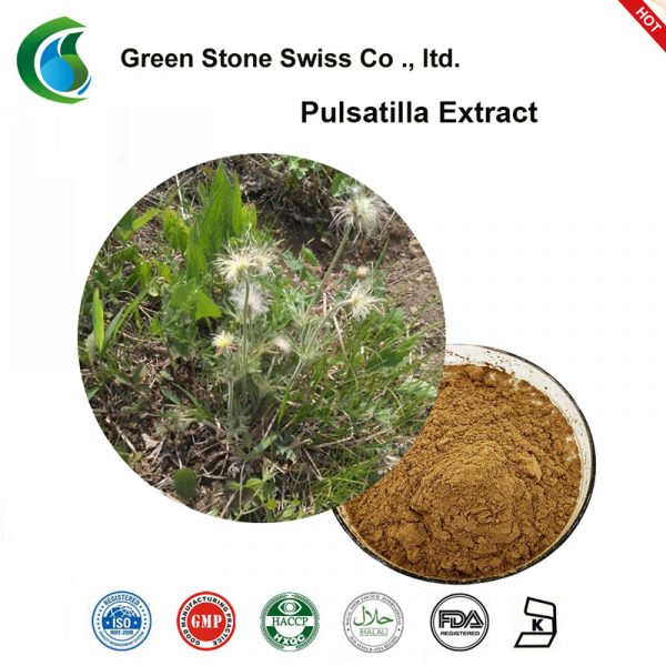 Chinese Pulsatilla Root Extract